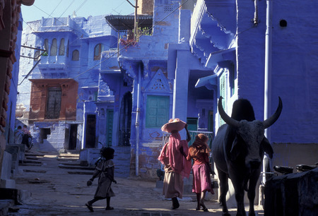 altstadt: the blue city in the old town of Jodhpur in Rajasthan in India.