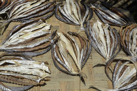 dry fish: a fish production make dry fish products in the city of Myeik in the south in Myanmar in Southeastasia. Stock Photo
