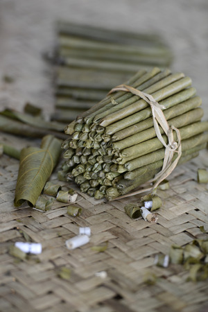 cheroot: a Tabacco and cigar and cheroot Factory near the Village of Phaung Daw Oo at the Inle Lake in the Shan State in the east of Myanmar in Southeastasia.
