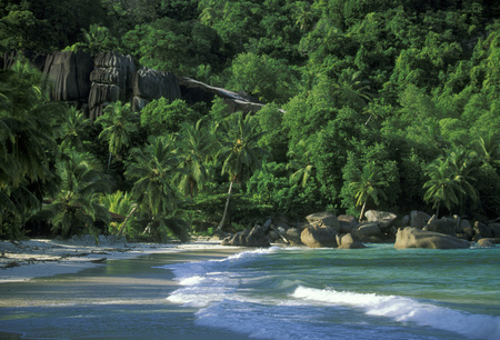 afrika: a Beach on the coast if the Island La Digue of the seychelles islands in the indian ocean