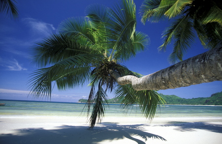 afrika: a Beach on the coast if the Island Praslin of the seychelles islands in the indian ocean Stock Photo