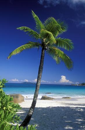 une plage sur la côte si l'île Mahé des îles seychelles dans l'océan indien