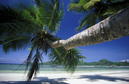 afrika: a Beach on the coast if the Island Mahe of the seychelles islands in the indian ocean