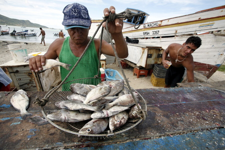 southamerica: the fish market at the beach in the town of Juangriego on the Isla Margarita in the caribbean sea of Venezuela.