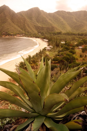 southamerica: the coast in the town of  chuao on the caribbean coast in Venezuela.