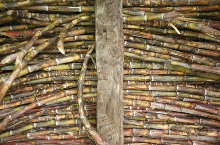 suger: suger cane at the market the village of choroni on the caribbean coast in Venezuela.