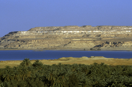 north africa: the Landscape and nature of the Oasis and village of Siwa in the lybian or western desert of Egypt in north africa
