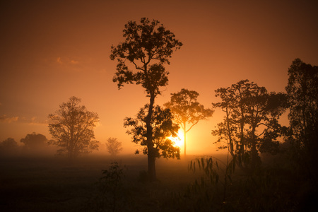 surin: the landscape in the morning and south of the city of Surin in Isan in Thailand. Stock Photo