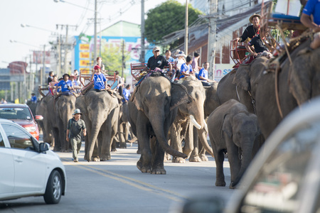 surin: elephants on the streets in the city centre of Surin at the Elephant Round-up Festival in the city of Surin in Northeastern Thailand in Southeastasia.