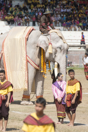 surin: one of the few White Elephant at the Elephant Round-up Festival in the city of Surin in Northeastern Thailand in Southeastasia.