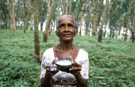 agriculture sri lanka: a rubber factory near the town of Hikkaduwa in the southwest of Sri Lanka in Asien. Editorial