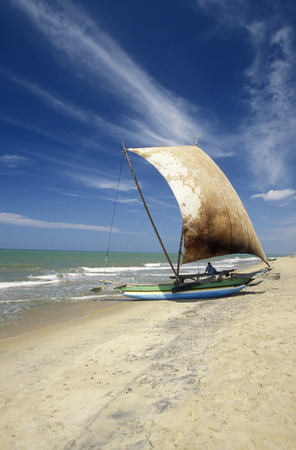 asien: Dhoni Fishingboats at the coast of Nagombo at the westcoast of Sri Lanka in Asien.