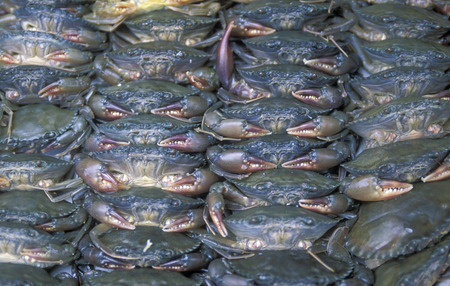 can tho: crab at the Flooting Market on the Mekong River near the city of Can Tho in the Mekong Delta in Vietnam