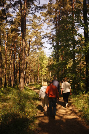 jurmala: a forest in the town of jurmala east of the city of Riga in latvia in the baltic region in europe.
