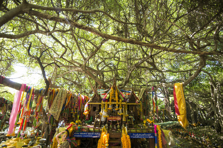 the mangrove Forest park of the Sai Ngam Bayan Tree in the Town of Phimai in the Provinz Nakhon Ratchasima in Isan in Thailand.  Thailand, Phimai, November, 2017 Stok Fotoğraf - 98001669