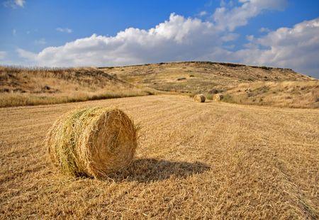 hay field: Golden Hay Field in Cyprus.