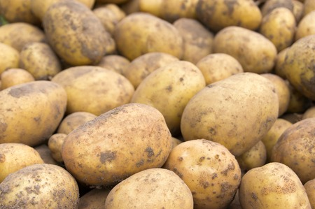 unwashed: Overhead shot of a pile of unwashed potato