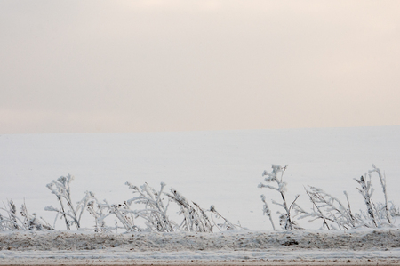 contryside: View of frozen grass on a winter field