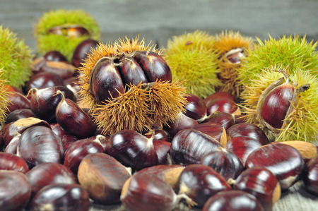 fagaceae: Close up photo of bunch of chestnuts Stock Photo