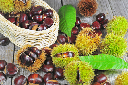 fagaceae: Photo of chestnuts on a old wooden table Stock Photo
