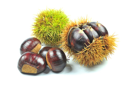 fagaceae: Close up photo of chestnuts on white background Stock Photo