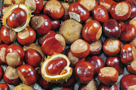 horse chestnuts: Close up photo of a horse chestnuts