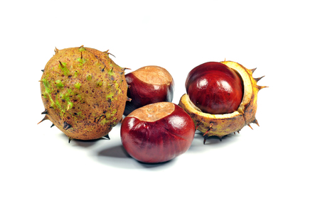 horse chestnuts: Close up photo of horse chestnuts on white background