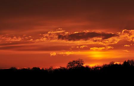 naranja arbol: Foto del cielo de color naranja al atardecer y siluetas de �rboles