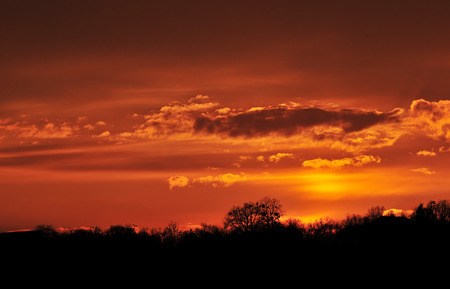 orange tree: Photo of orange coloured sky at sunset and tree silhouettes