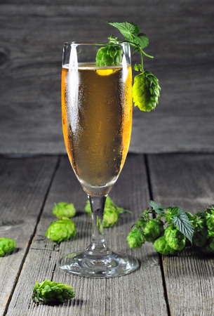common hop: Glass of ice cold beer and green hops Stock Photo