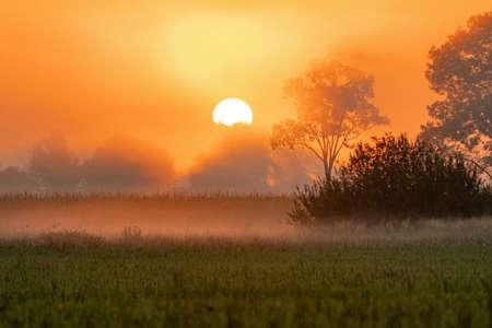 Sun rising above landscape in early summer morning Zdjęcie Seryjne