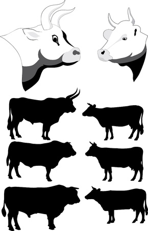 Cows and bulls Stock Vector - 10104421