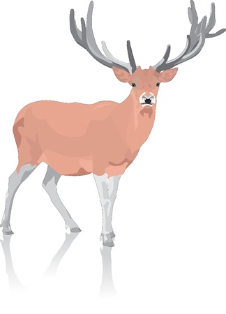 Deer Stock Vector - 12481556