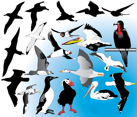 Seabirds Vector
