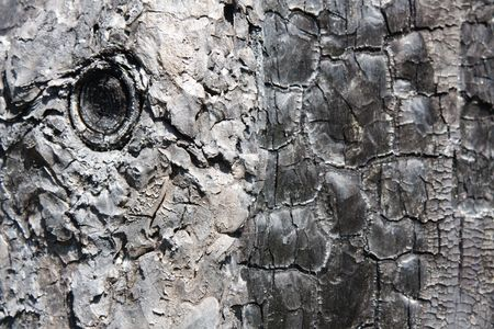 The scorched bark of a tree