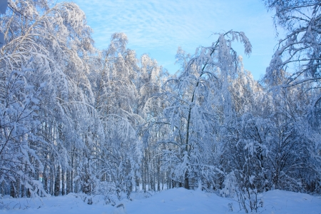 winter forest,blue sky,sunlight Stock Photo