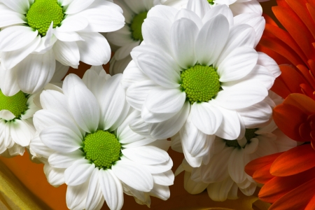 Flower Arrangement,background