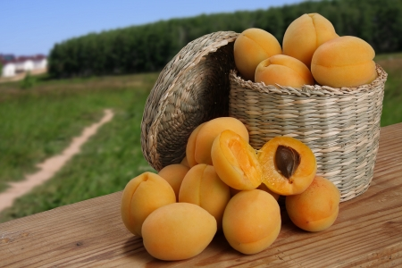 apricots in a basket and next to fields and forests