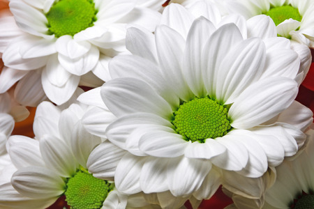 background from flowers with white  petals Stock Photo