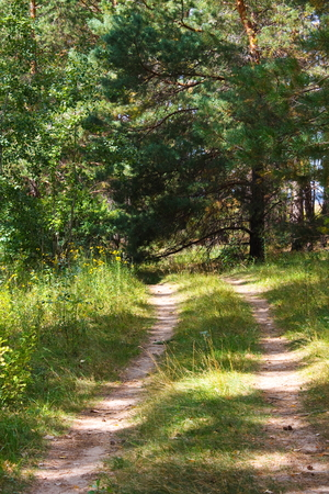 Road in the forest. Summer. Day. Stock Photo