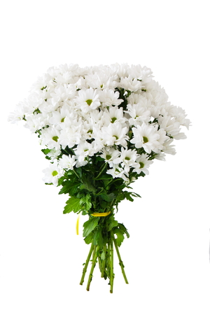 bouquet white flowers on white background