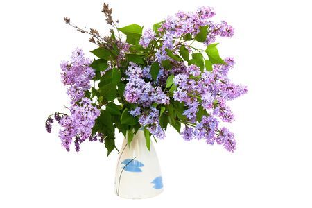 lilac flower on white background Stock Photo