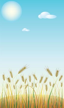 wheaten: Wheaten field.Vector decorative illustration for graphic design. Illustration