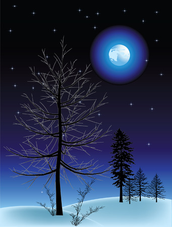 Night in the winter.Vector decorative illustration for graphic design.
