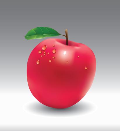Apple.    Vector