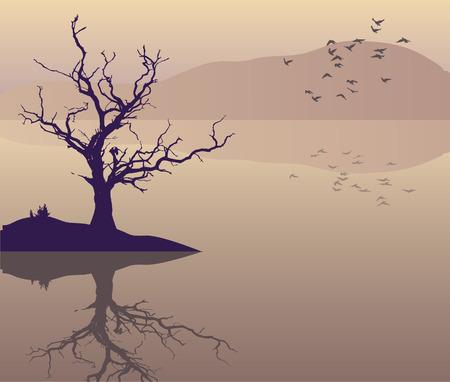 lake sunset:   lake