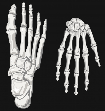 skeleton hand and foot