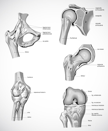 Suglobov,joints