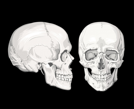 brainpan: Skulls Illustration