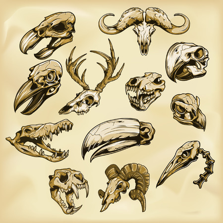 Animal skulls illustration